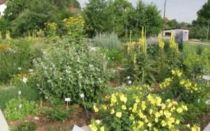 Arneipflanzengarten Zeiningen